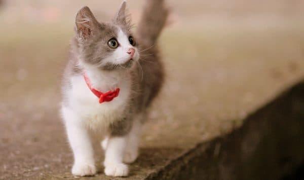 У кошки параанальные железы