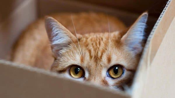 У кота поликистоз почек