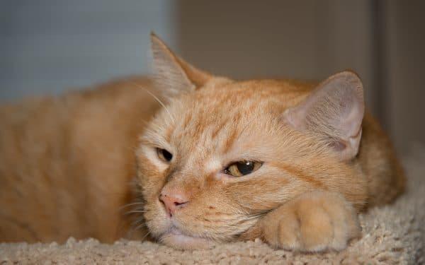 Бывают ли рыжие кошки читайте статью