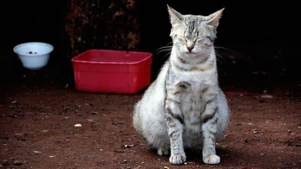 Чем кормить беременную кошку. Липидный обмен