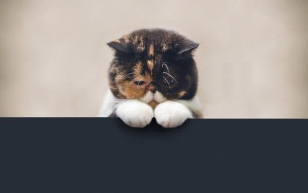 Глисты у кошек и котов читайте статью