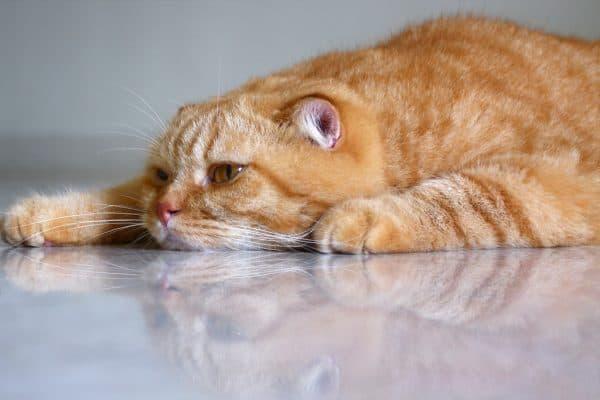 Грустный котик