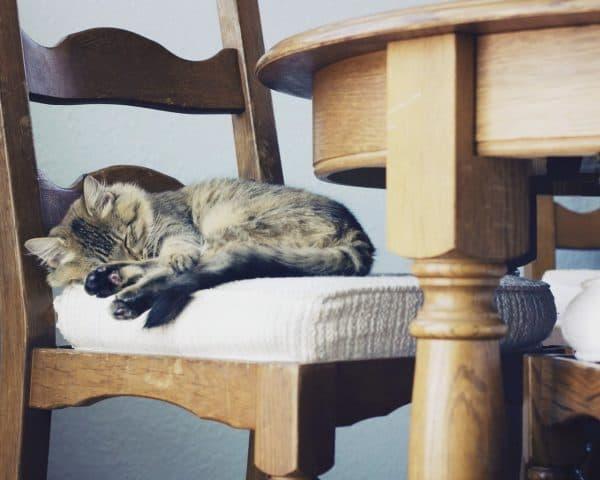Как отучить кошку драть обои и мебель. Внимание и забота