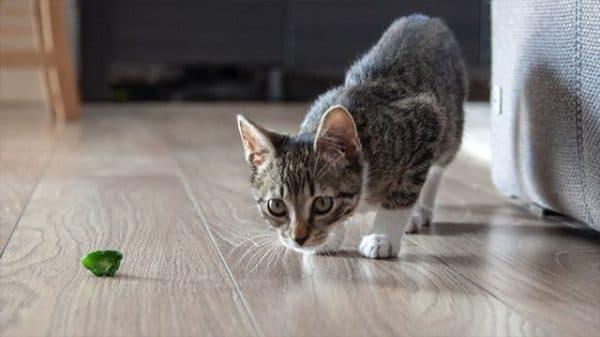Как отучить кота метить территорию читайте статью