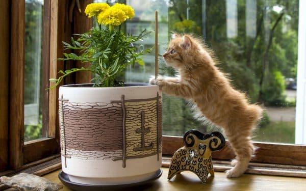 Как отучить котенка грызть растения