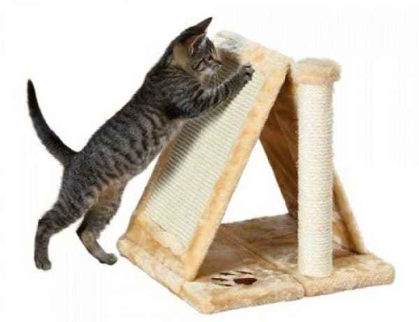 Как приучить котенка к когтеточке. Домик