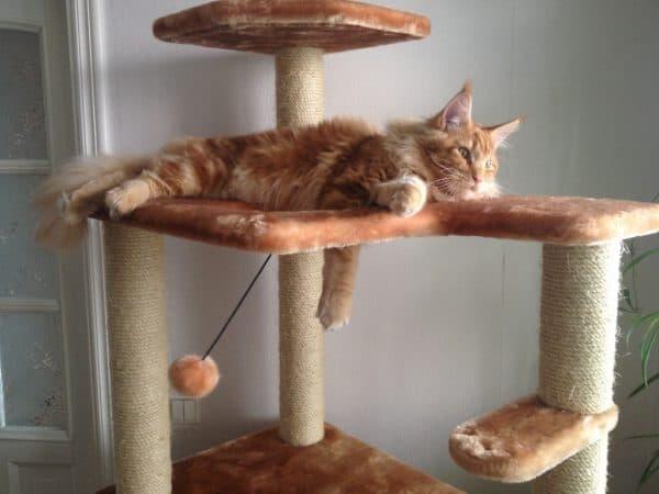 Как приучить котенка к когтеточке. Где устанавливать