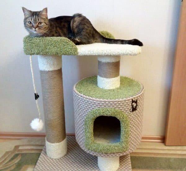 Как приучить котенка к когтеточке. Игровой комплекс
