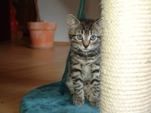 Как приучить котенка к когтеточке. Отучить от старого места