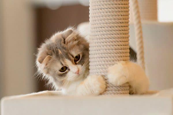 Как воспитывать котенка. Точилка для ногтей