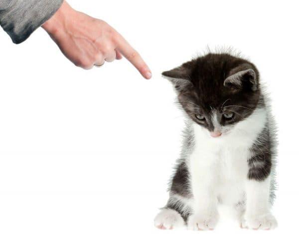 Оптимальный возраст для обучения котика