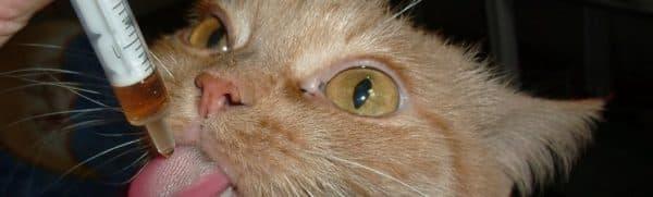 Вазелиновое масло при запорах у кошек. Инструкция по применению читайте статью