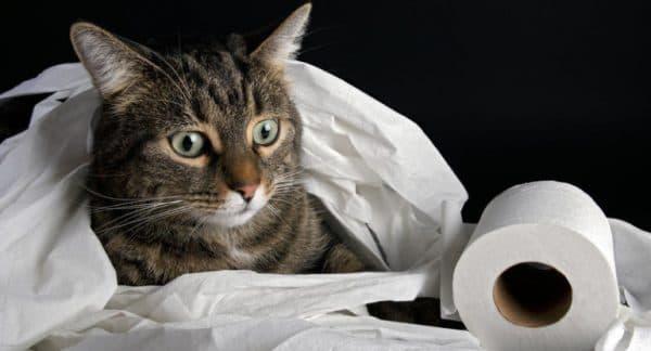 Возникновение запора у кота