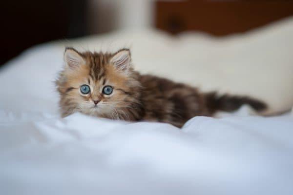Этапы роста представителей кошачьего мира