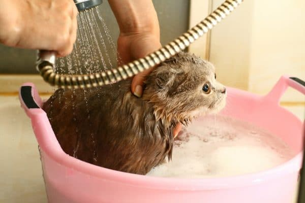 Как помыть кота читайте статью