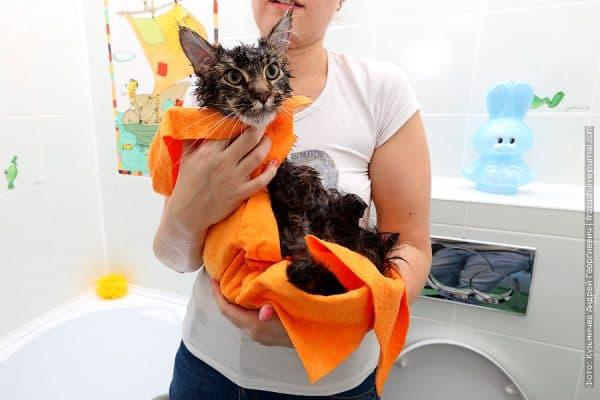 Как правильно сушить кота