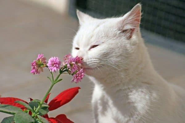 Какие запахи не любят кошки. Отпугивающие запахи читайте статью