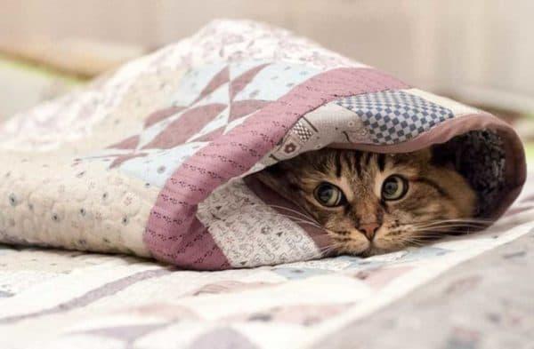 Кошка гадит на постель