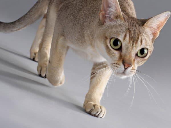 Кошка не просит кота