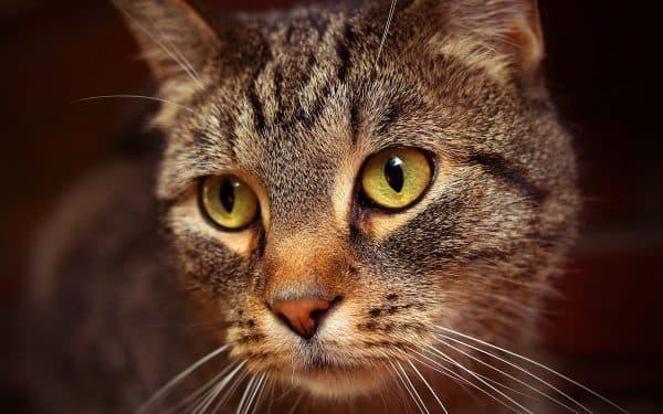 Кошка перестала просить котика