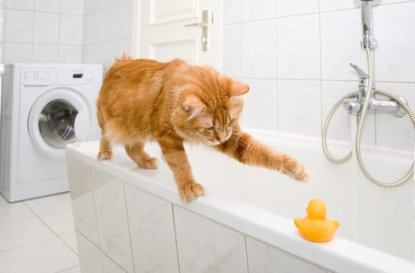 Кошка просит котика