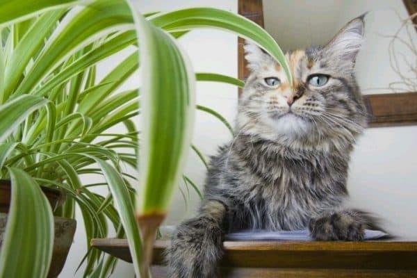 Кот с домашним растением