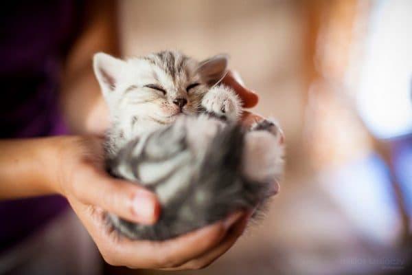 Кот спит в руках