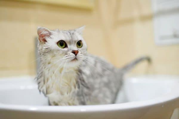 Кота моют