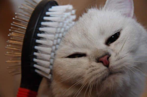 Линька у кошек читайте статью