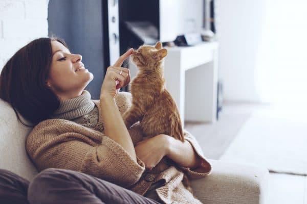 Переводчик с кошачьего языка на русский читайте статью