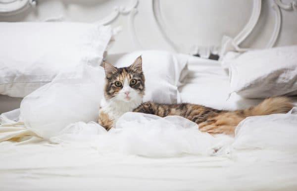 Почему кошка гадит на постель. Устраняем причины читайте статью