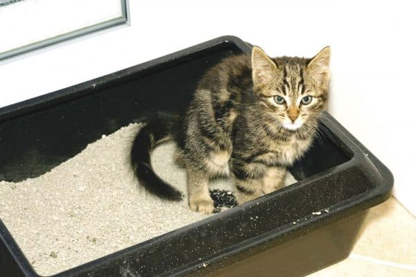 Почему кот писает в лоток а какает рядом читайте статью