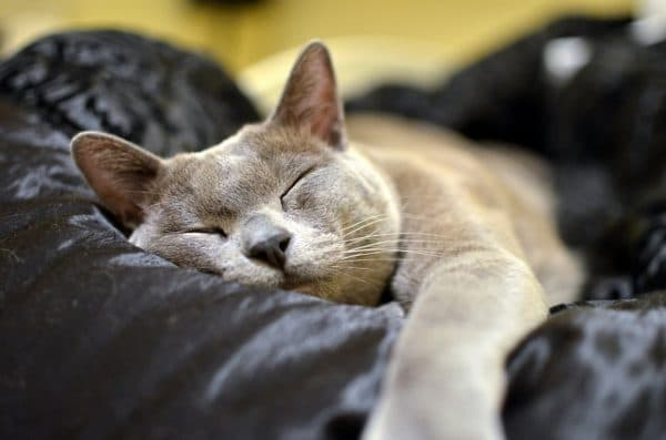 Почему котики так много спят