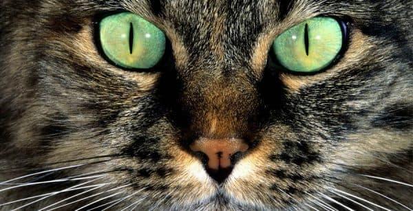 Почему у кота узкие зрачки