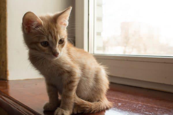 Рыжий котенок 3 месяца