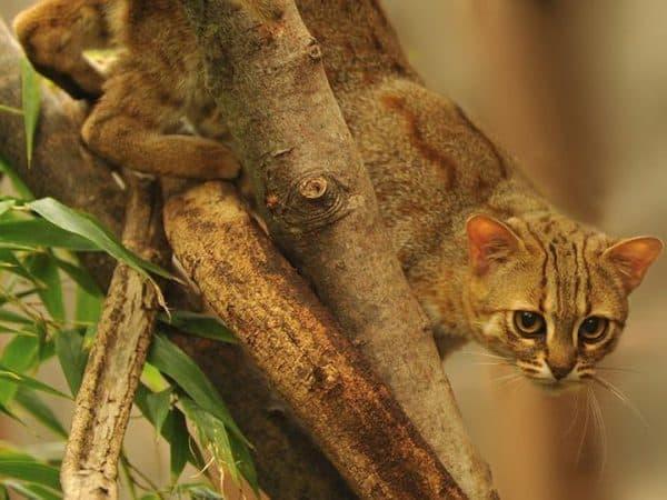 Ржавая кошка фото