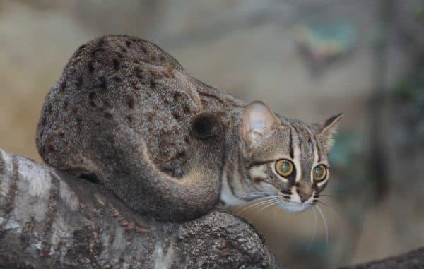 Ржавая кошка на дереве