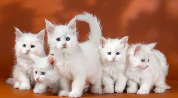 Самые смешные и прикольные клички для котиков