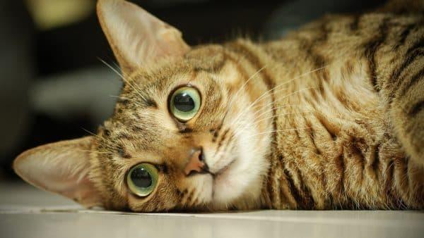 Сколько должен весить кот в зависимости от возраста и породы читайте статью