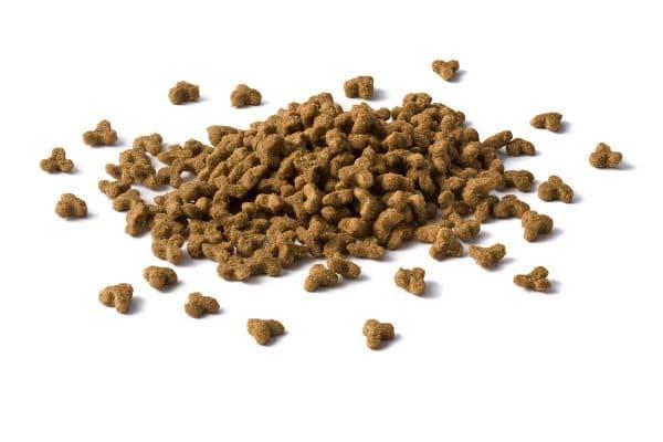 Сухие корма для кошек читайте статью