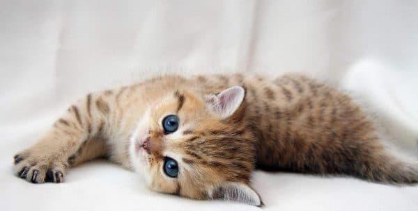 В каком возрасте правильно забирать котёнка от кошки читайте статью