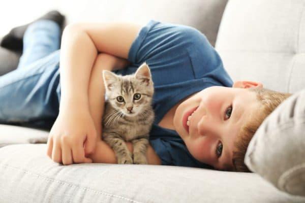 В каком возрасте правильно забирать котёнка от кошки