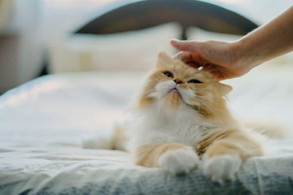 Забота и внимание котику