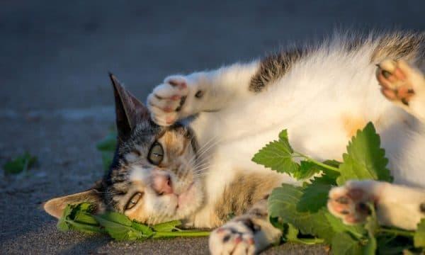 Запахи, приятные кошке