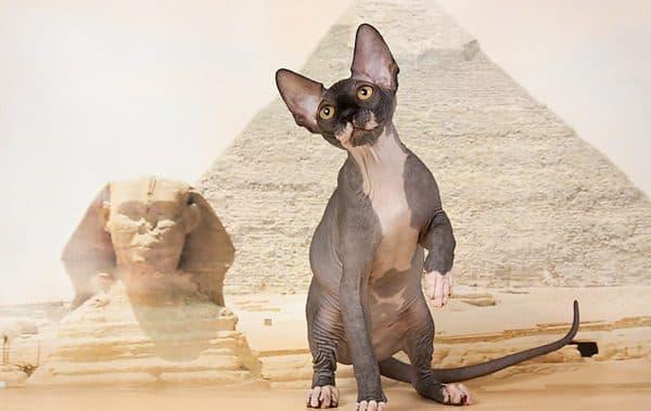 Египетские имена для кошек и котов читайте статью