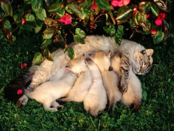Цвет котенка во сне имеет значение