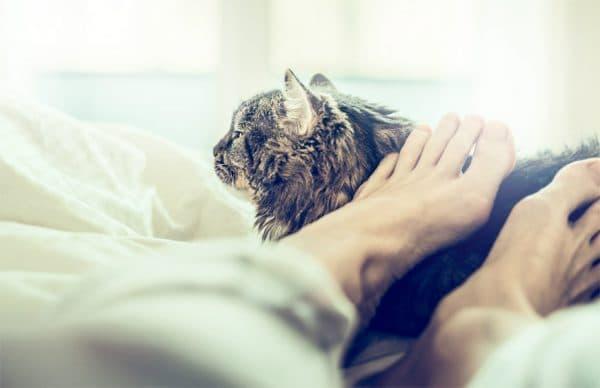 Дискомфорт от ночного отдыха с кошкой