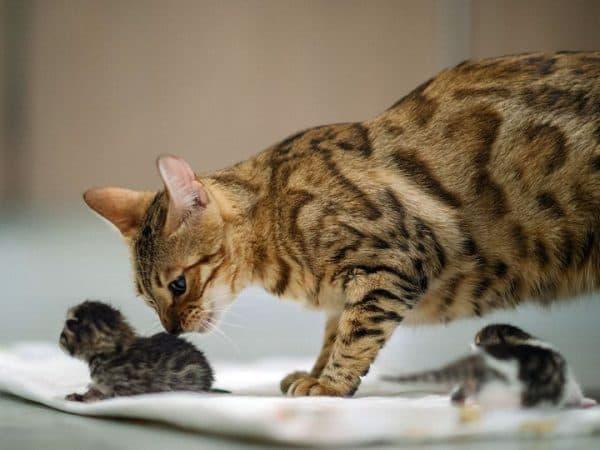 Интерпретация сна с котиком в сонниках