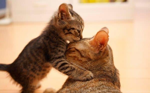 К чему снится кошка с котятами мужчине