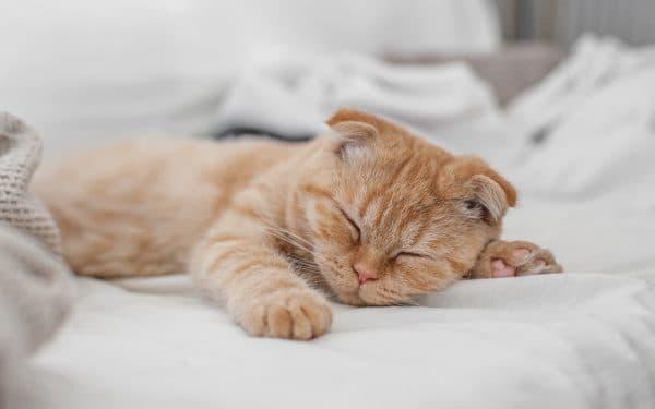 К чему снится рыжий котенок. Подробности сна